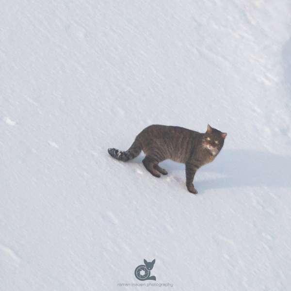 Wild_cat_insta_def_def.jpg